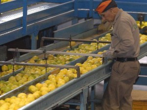 Conflicto del limón: en Tucumán se le pone agria la boca a la burguesía