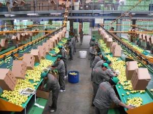 Continúa el conflicto del limón en Tucumán