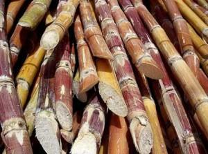 Bioetanol: un dulce negocio