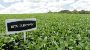 Elecciones provinciales, Chaco 2015: ganó…Monsanto