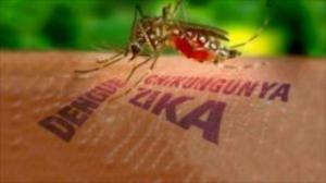 """El dengue, el zika y el """"progreso"""" capitalista"""