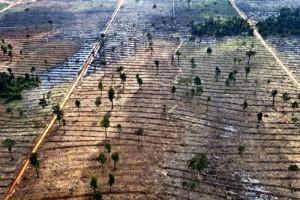 La producción capitalista destruye al ser humano y a la naturaleza