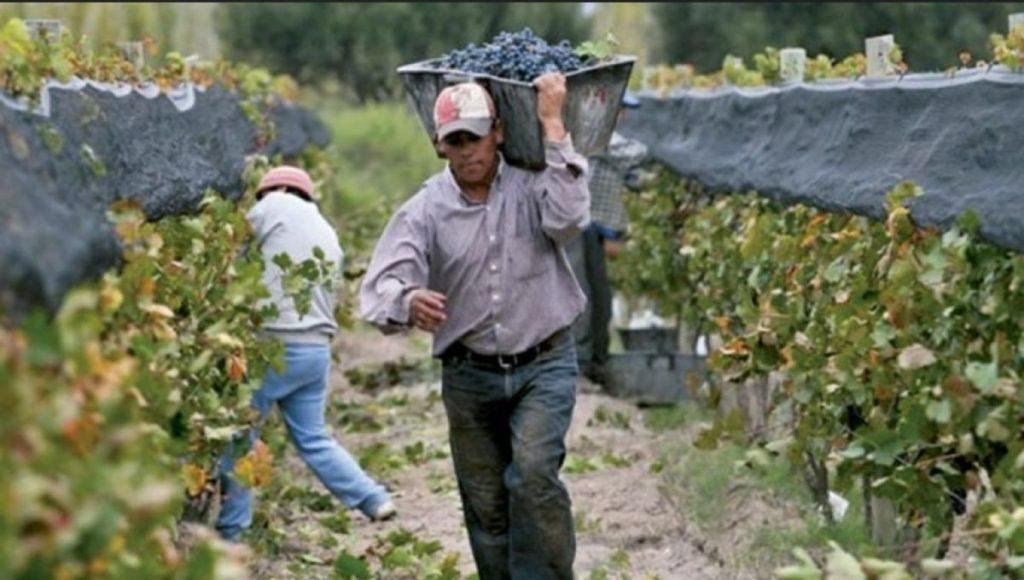 La verdad en voz de los obreros vitivinícolas