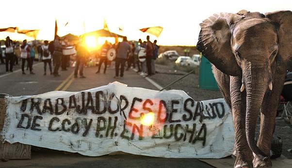 Neuquén: el elefante que Gutiérrez no esperaba